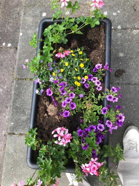 TVBD - Fleur en kleur